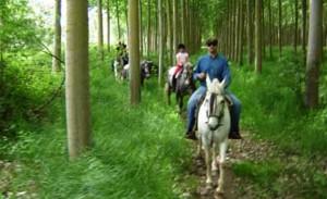 casa-rural-con-caballos-andalucia